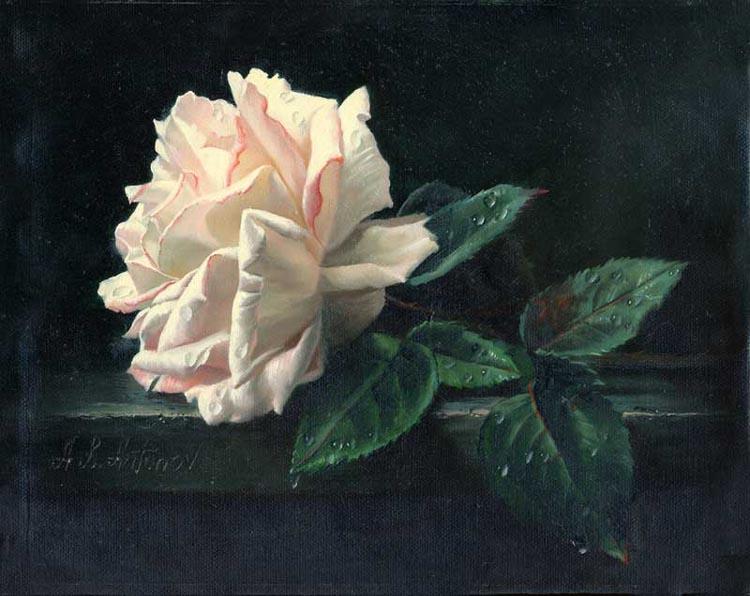 white rose 8x10